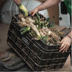 espigoladors cargando cajas de verdura